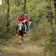 Ad Anghiari l'edizione 2015 della Coppa delle Regioni di Endurance