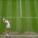 Wimbledon 2021 – Barty vs Pliskova sarà la finale del Singolare Femminile